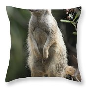 Getting Up Throw Pillow