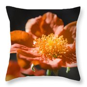 Geum Scarlet Avens Throw Pillow