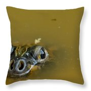 Giant Amazonian River Turtle Throw Pillow