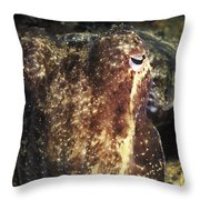 Giant Cuttlefish Camouflage Throw Pillow
