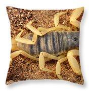Giant Hairy Scorpion Throw Pillow