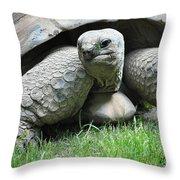 Giant Land Turtle Throw Pillow