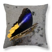 Giant Owl Butterfly Throw Pillow
