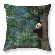 Giant Panda Ailuropoda Melanoleuca Throw Pillow by Cyril Ruoso