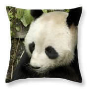 Giant Panda At Rest Throw Pillow