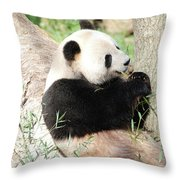 Giant Panda Bear Leaning Against A Tree Trunk Eating Bamboo Throw Pillow