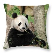 Giant Panda Bear Lounging On Against Tree Trunk Throw Pillow