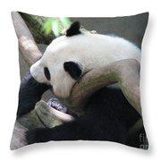 Giant Panda Bear Resting On A Fallen Tree Throw Pillow