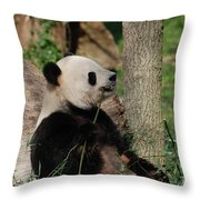 Giant Panda Bear Sitting Up Leaning Against A Tree Throw Pillow
