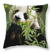 Giant Panda Eating Bamboo Throw Pillow