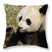 Giant Panda Feeding Himself Shoots Of Bamboo  Throw Pillow
