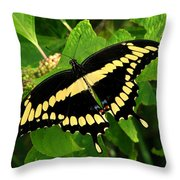 Giant Throw Pillow
