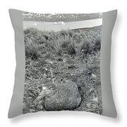 Giant Petrel Nesting In South Georgia  Throw Pillow