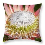 Giant Pink King Protea Flower Throw Pillow