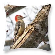 Giant Red Headed Woodpecker  Throw Pillow