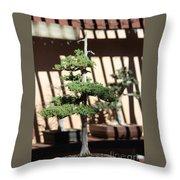 Giant Redwood Bonsai  Throw Pillow