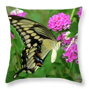 Giant Swallowtail Butterfly  IIi Throw Pillow