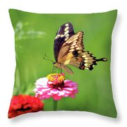 Giant Swallowtail Butterfly On Pink Zinnia Throw Pillow