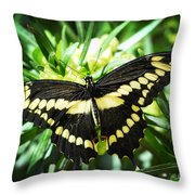 Giant Swallowtail Throw Pillow