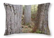 Giant White Pines - White Mountains New Hampshire Throw Pillow
