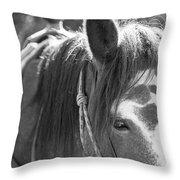 Gillagan The Horse In Glacier National Park   Throw Pillow