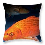ginrin chagoi Koi  Throw Pillow