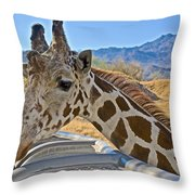 Giraffe At Feeding Station In Living Desert Zoo And Gardens In Palm Desert-california Throw Pillow