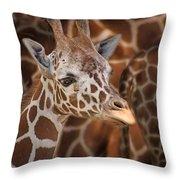 Giraffe - Camouflage Throw Pillow