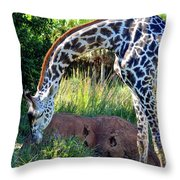 Giraffe Feasting Throw Pillow