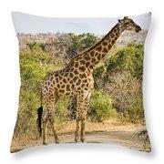 Giraffe Grazing Throw Pillow
