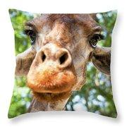 Giraffe Interest Throw Pillow