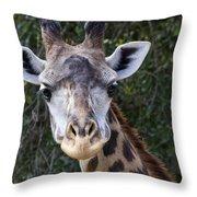 Giraffe Looking At You Throw Pillow