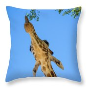 Giraffe Lunch Throw Pillow