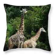 Giraffe, Male And Female Throw Pillow