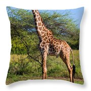 Giraffe On Savanna. Safari In Serengeti Throw Pillow