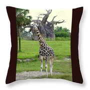 Giraffe With African Baobob Tree Throw Pillow