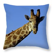 Giraffe With Oxpeckers Throw Pillow