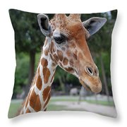 Giraffe Youth Throw Pillow