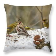 Give Me A Kiss. Redpolls And Greenfinches Throw Pillow