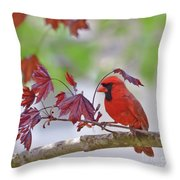 Give Me Shelter - Male Cardinal Throw Pillow by Kerri Farley