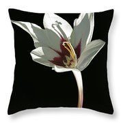 Glad Curves Throw Pillow