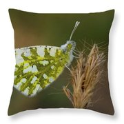 Glanville Fritillary  Throw Pillow