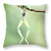 Glass Frog Throw Pillow