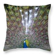 Glassy Peacock  Throw Pillow