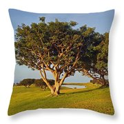 Glory In The Morning Txb Throw Pillow