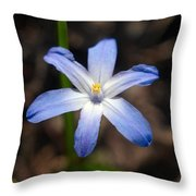 Glory Of The Snow 1 Throw Pillow