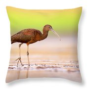 Glossy Ibis Plegadis Falcinellus Throw Pillow