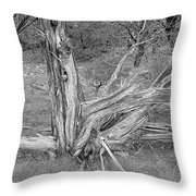 Gnarled Cedar Stump Throw Pillow