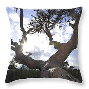Gnarled Pine Tree And Sun Throw Pillow