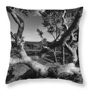 Gnarled Pine Tree At The Coast Throw Pillow